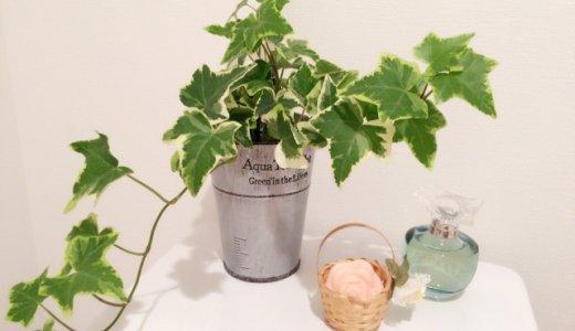 復縁 風水 植物